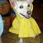 raincoat-and-lisa